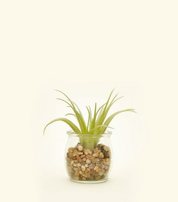 Crystal Spike Plant by New Look